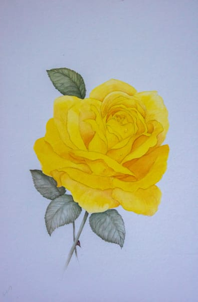 A Yellow Rose, Acrylic On Paper, 2009 Art | Roost Studios, Inc.