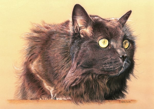 Samantha, color pencil of cat by Greg V Smith