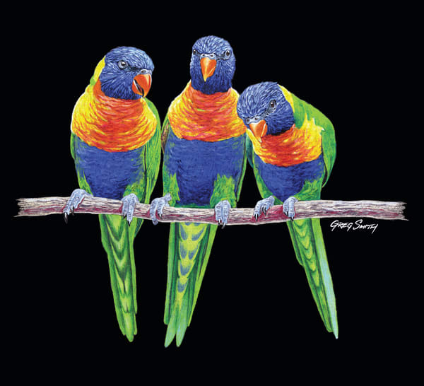 3 Amigos, a color pencil painting of Australian Rainbow Lorikeets by Greg V Smith