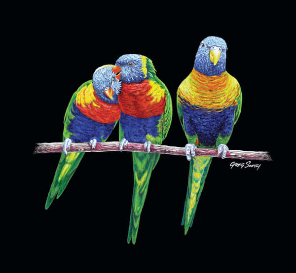 3 Amigos 2 is a color pencil painting by Greg V Smith of Australian Rainbow Lorikeets on black archival art board
