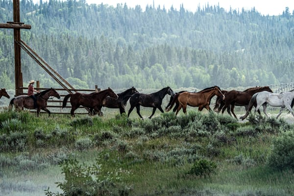 Round Up - Horses and cowboy on a Wyoming ranch photograph print