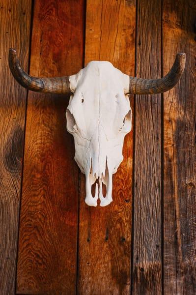 Santa Fe Bull Skull