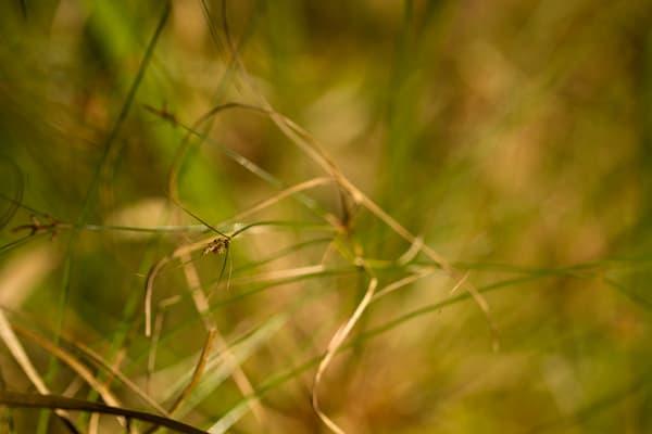 Golden Light And Grass Photography Art | Carol's Little World