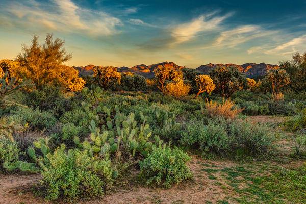 Sonora Desert Sunset View
