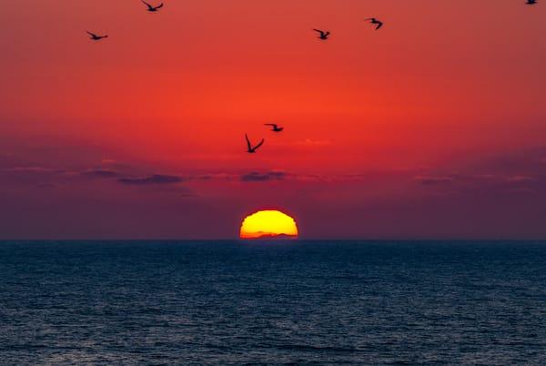 Sunset Ocean bird silhouettes
