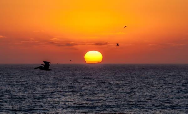 Sunset bird silhouettes ocean