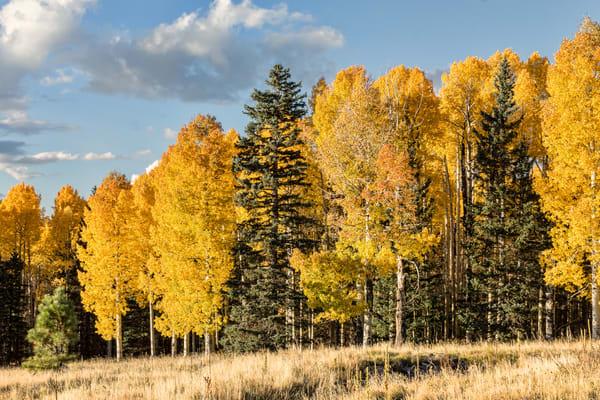 Autumn Beauty Fall Colors