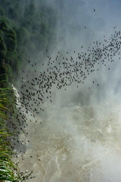 Birds Over Iguazu Falls Art | karenihirsch
