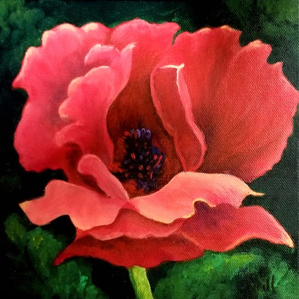 JONeill-Red-Poppy