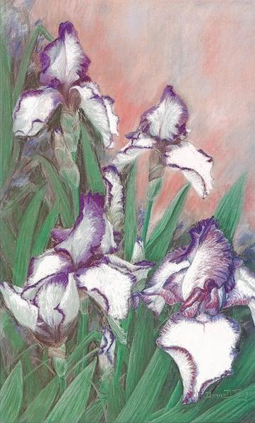 Rare Dark Purple and White Bearded Iris Pastel by Donna D Turgeon