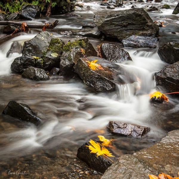 Fall Leaves Creek Photography Art   Barb Gonzalez Photography