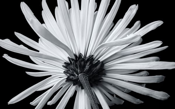 White Burst Art | James Patrick Pommerening Photography