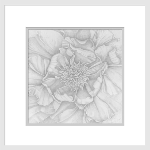In My Neighborhood - Tree Peony is a graphite drawing. Options include matting and framing.