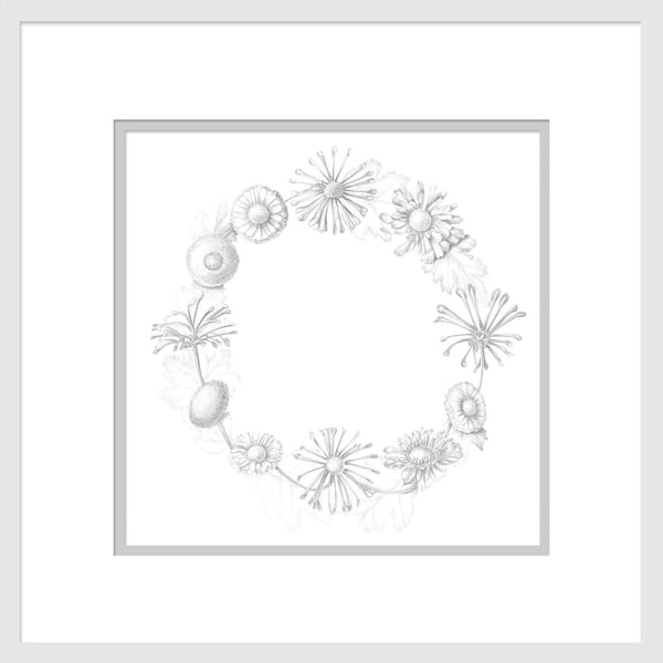Circle of Compositae is a graphite drawing. Options include matting and framing.