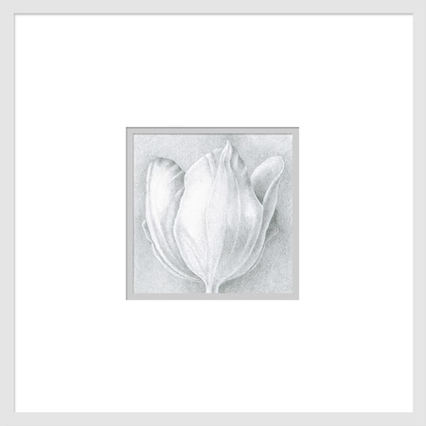 Small Wonders Tulip Series #1 is a graphite drawing. Options include matting and framing.