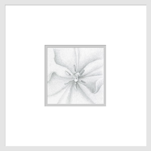 Small Wonders Tulip Series #2 is a graphite drawing. Options include matting and framing.