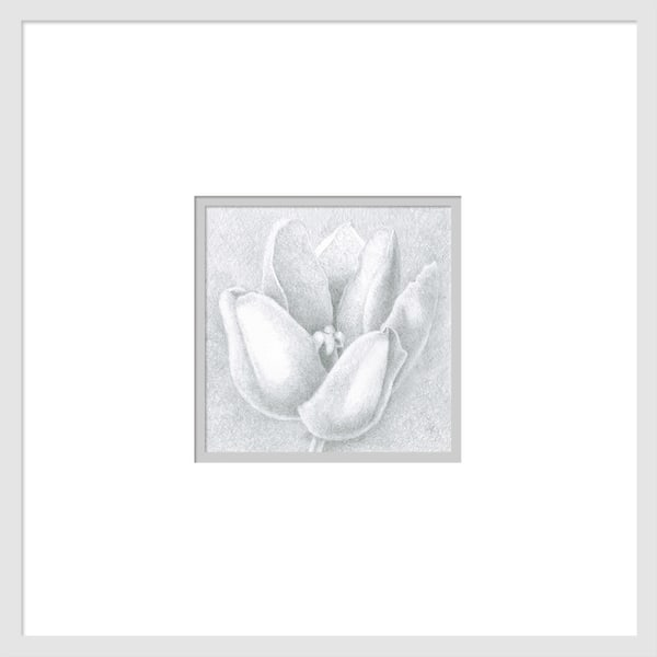 Small Wonders Tulip Series #3 is a graphite drawing. Options include matting and framing.