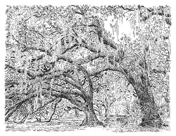 old oak grove (fountain), city park, new orleans:  fine art prints in elegant pen available for purchase online
