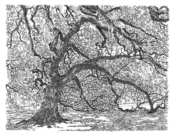 old oak grove (live oak tree), city park, new orleans:  fine art prints in elegant pen for sale online