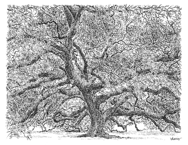 old louisiana state capitol (live oak tree), baton rouge:  fine art prints in elegant pen available for purchase online