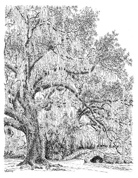 old oak grove (stone bridge), city park, new orleans:  fine art prints in elegant pen available for purchase online