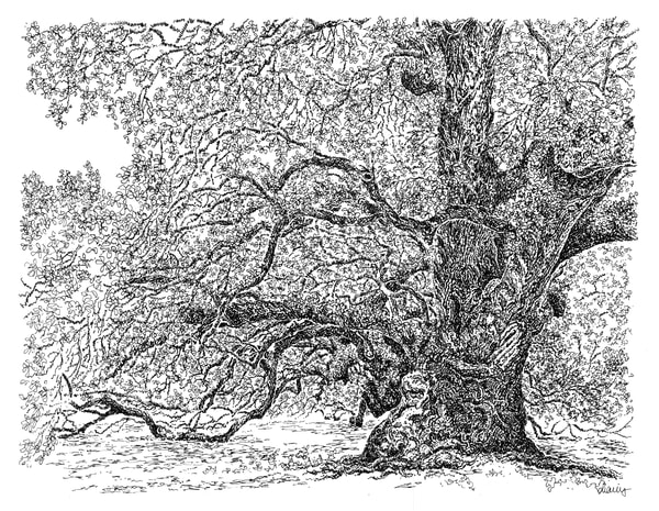 gov. e.d. white oak, thibodaux, louisiana:  fine art prints in elegant pen available for purchase online