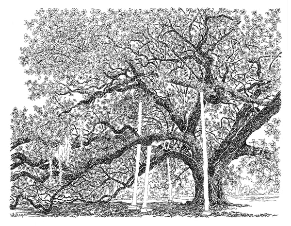 mcdonough oak, new orleans:  fine art prints in elegant pen available for purchase online