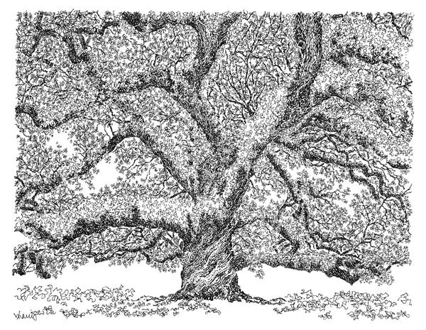 st. john cathedral oak, lafayette, louisiana:  fine art prints in elegant pen available for purchase online