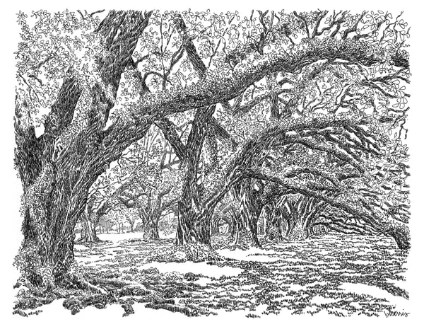 live oaks, oak alley plantation, vacherie, louisiana:  fine art prints in elegant pen available for purchase online