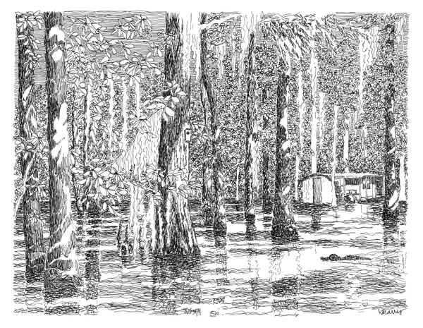 honey island swamp (camp with gator), south louisiana:  fine art prints in elegant pen for sale online