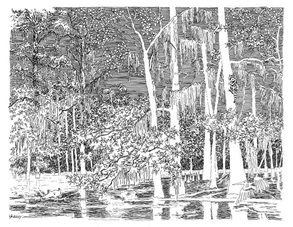 honey island swamp (critters), south louisiana:  fine art prints in elegant pen available for purchase online