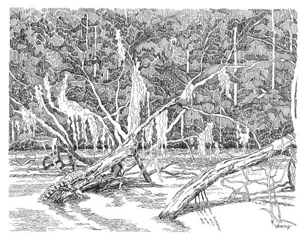 honey island swamp (gators on logs), south louisiana:  purchase online fine art prints in elegant pen
