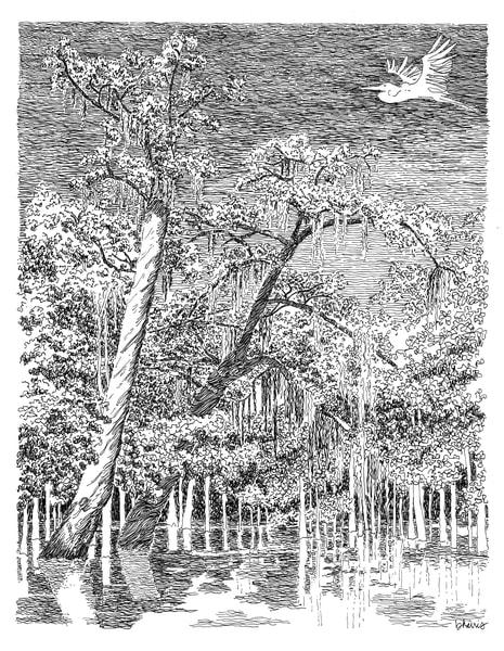 honey island swamp (soaring solitary egret), south louisiana:  fine art prints in elegant pen available for purchase online