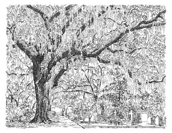 bonaventure cemetery (mossy live oaks), savannah, georgia:  fine art prints in elegant pen for sale online