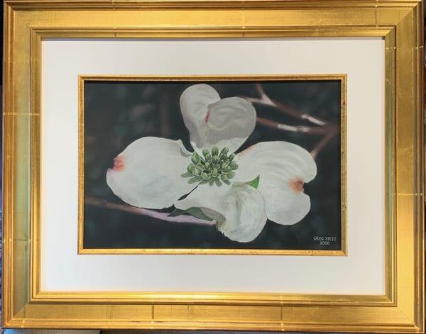 Greg Stett Art Pastels - Dogwood