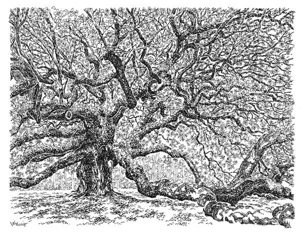 angel oak tree, johns island, south carolina:  fine art prints in elegant pen available for purchase online