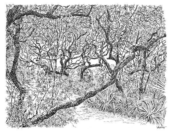 sand live oak grove, grayton beach (30a), florida:  fine art prints in elegant pen available for purchase online