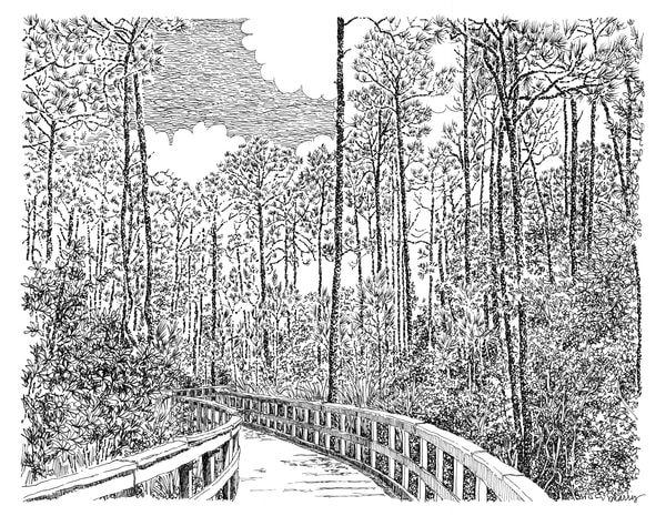 boardwalk, watercolor (30a), florida:  fine art prints in elegant pen available for purchase online