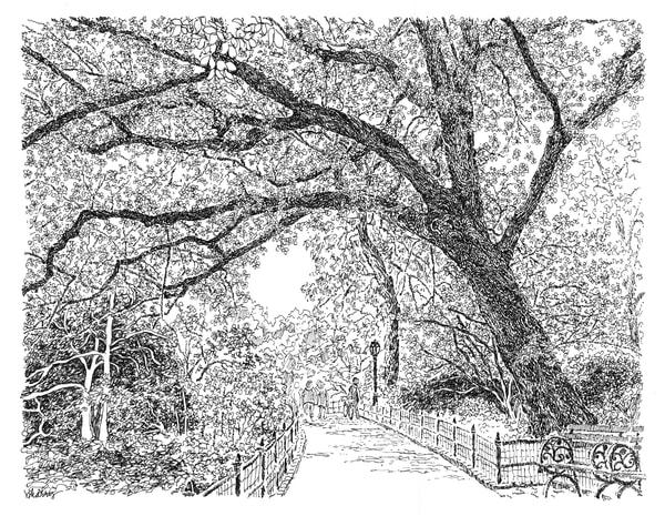 central park (delightfully shaded path), new york city:  purchase online fine art prints in elegant pen