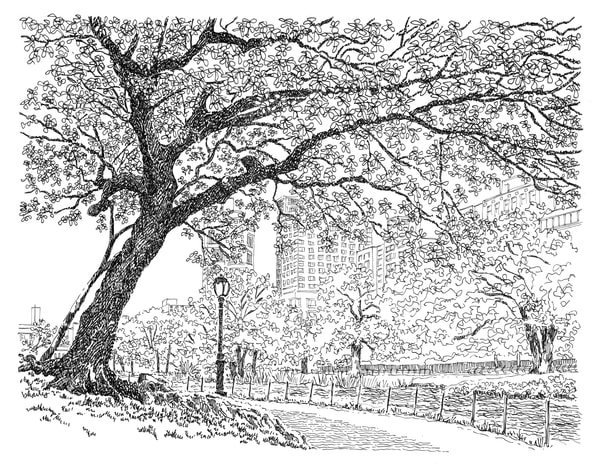 central park (tree by lake), new york city:  fine art prints in elegant pen available for purchase online