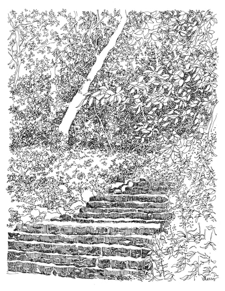 central park (stairs amidst greenery), new york city:  fine art prints in elegant pen for sale online