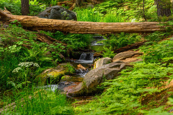 Dorst Creek  Sequoia Photography Art | Casey McFarland Photography