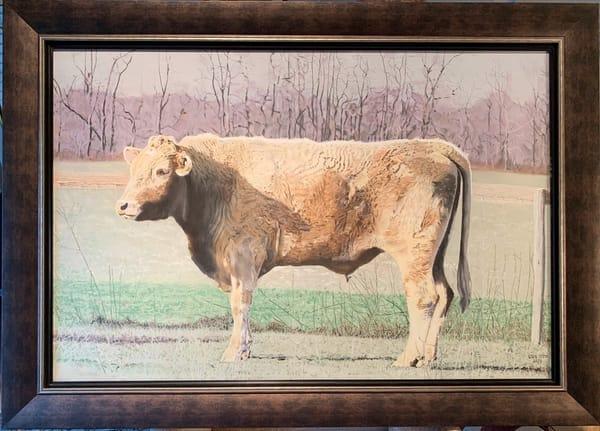 Greg Stett Art Pastels - Cow