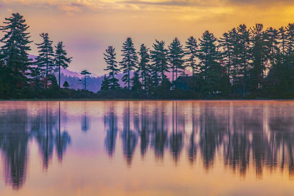 Pines Aligned Photography Art | David Lawrence Reade