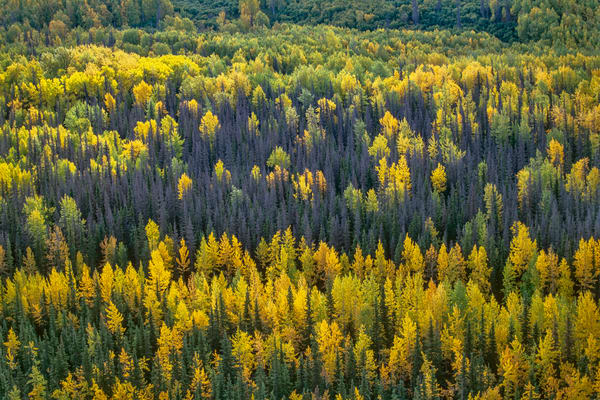 Tamarack Tableau Photography Art | David Lawrence Reade