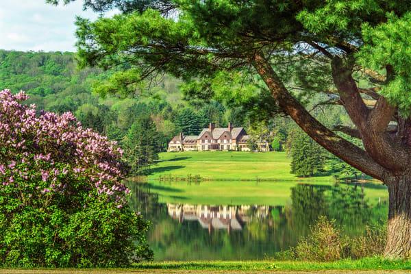 Allegany Lilacs Photography Art | David Lawrence Reade