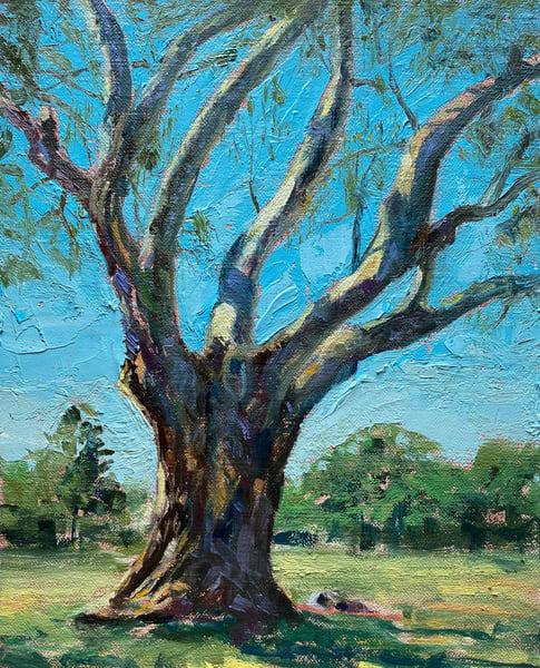 Bixby Park Eucalyptus  Art | Danielsartwork