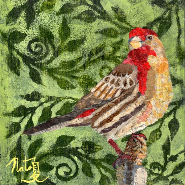 Backyard Birds: Mr. Housefinch, King Of The Patio Art | Poppyfish Studio
