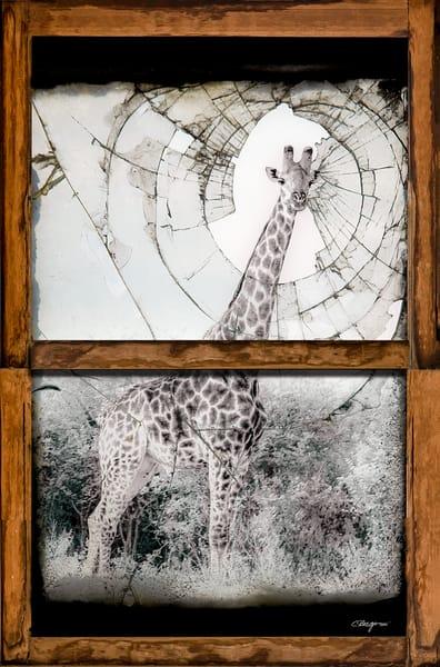Confinement, Day 3 Art | Carolyn A. Beegan Fine Art