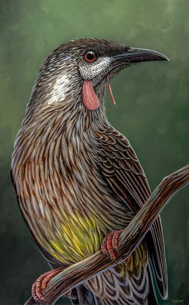 Renee - Red Wattlebird